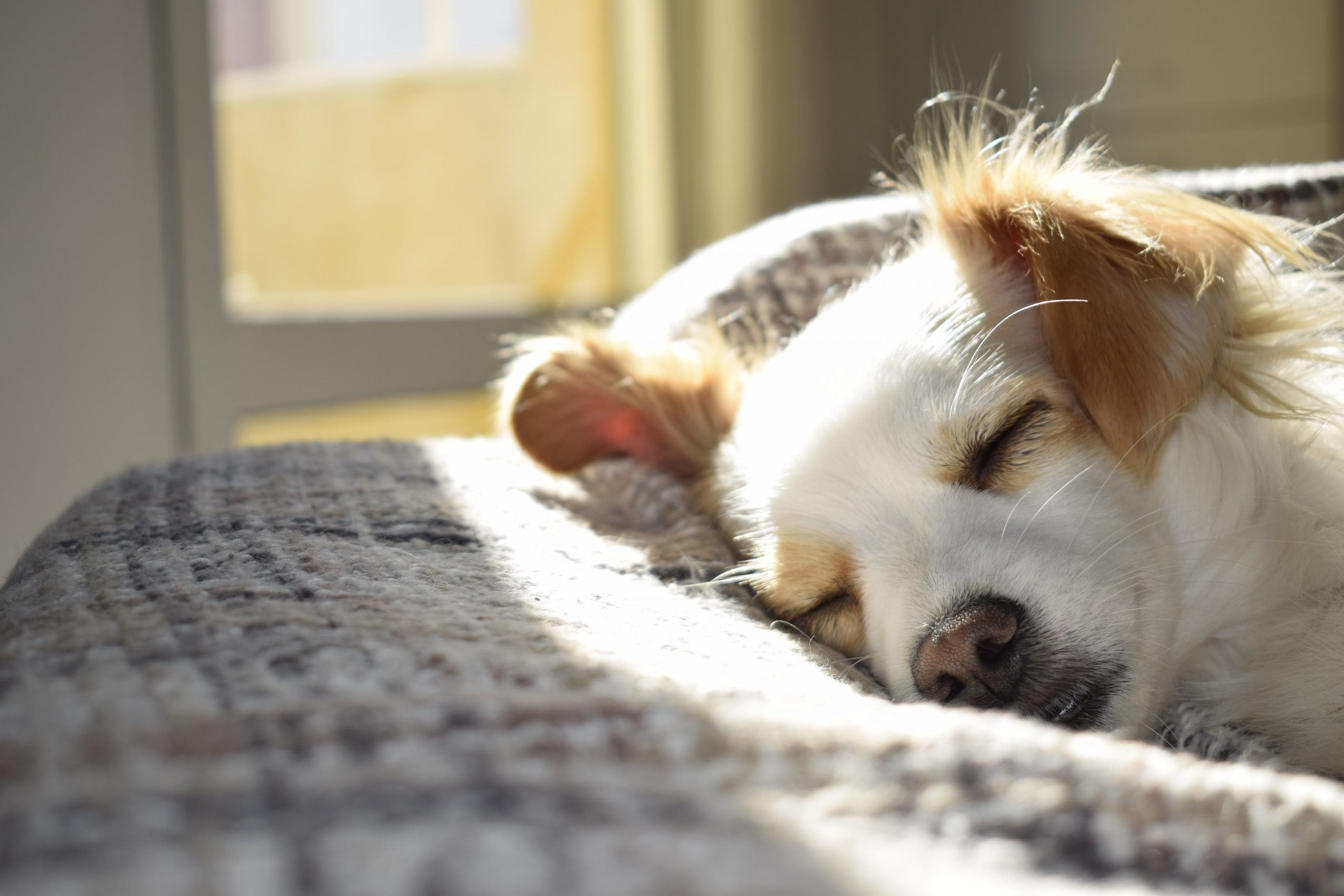 Dealing With Stubborn Pet Odours: What to Do